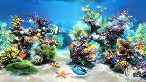 Betta Fish Wallpapers HD Bettas Fishes ...
