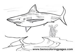 Small Picture Megalodon free coloring page