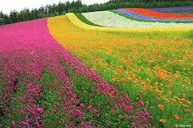 color garden. 211617887-colorful-garden Color Garden A