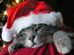 49+] Christmas Kittens Wallpaper on ...