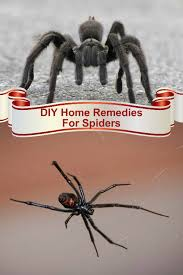diy home remes for spiders most spiders will not bite you and most spiders are