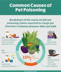 good houseplants safe for cats and dogs fix house plants toxic to cats