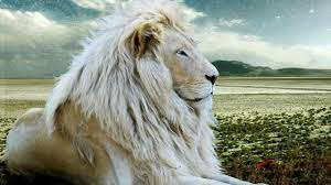 White Lion Wallpapers on WallpaperSafari