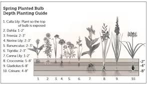 High Country Gardens Planting Guide