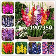 Shop <b>Flower Gladiolus</b> - Great deals on <b>Flower Gladiolus</b> on ...