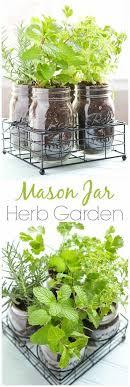 Hanging Kitchen Herb Garden Ideas For Indoor Gardens At Home Kitchen Wall Herb Garden