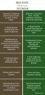 Difference Between Maltose And Sucrose Definition Structure