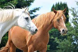 spanish slang phrases using the word horse