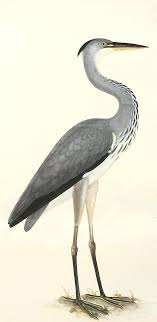 wall arts heron wall art grey bird prints designer