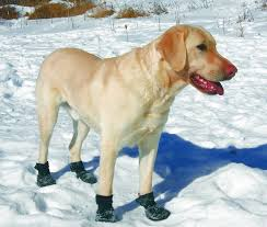 boots on dog in snow