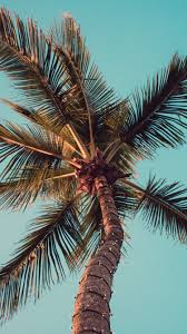 Download hd palm tree photos for free on unsplash. Palm Tree Iphone Wallpaper Hd