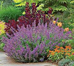 deer proof garden. Deer-Resistant Plants \u0026 Bulbs Deer Proof Garden