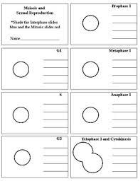 Meiosis Flip Book Meiosis Flipbook By Marnie Black Teachers Pay Teachers