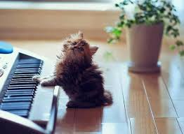 cute kittens sleeping on pianos. Contemporary Cute Cat Kitten Playing Piano Funny And Cute Kittens Sleeping On Pianos
