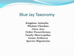 Blue Jay Robin Cardinal Finch And Pelican Taxonomy Chart 6 01 The Classification Of Living Organisms Ppt Video