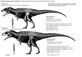 carcharodontosaurus size carcharodontosaurus saharicus skeletals mklll by franoys