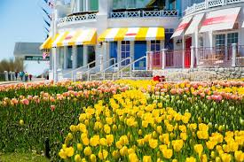 tulip season at grand hotel