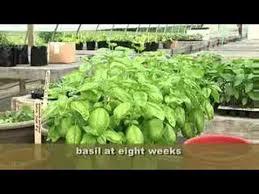 how to grow a herb garden. How To Grow The Perfect Herb Garden A O
