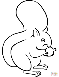Squirrel Eating Acorn Coloring Page Free Printable Coloring Pages