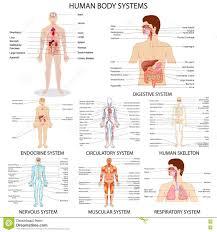 Body Systems Chart Human Organ Systems Chart Chart Of Different Human Organ
