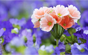 hd flowers 1280x800 hdq pics