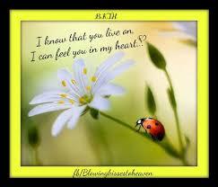 Ladybug Quotes Interesting Ladybug From Heaven Our Ladybugs From Heaven Pinterest Ladybug