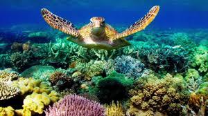 destruction of coral reefs destruction of coral reefs