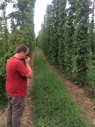 peter sniffing the hops