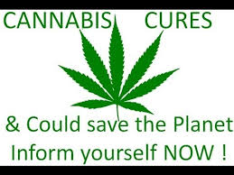 what kind of hemp oil cures cancer