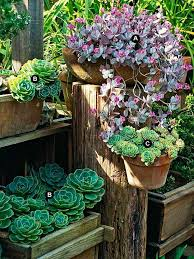 Best 25 Succulent Garden Ideas Ideas On Pinterest  Succulents Succulent Container Garden Plans