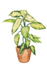 house plants. House Plants