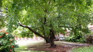 Can Trees Support In Creating A Meditative Space Isha Sadhguru