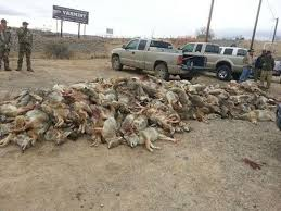 essay the shameful and disgusting culture of wildlife killing essay the shameful and disgusting culture of wildlife killing contests adventure journal com 2015 01 essay wildlife killing contests a