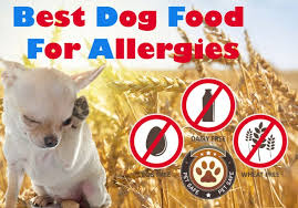 Best Dog Food For Allergies: The Guide To Finding The Non-allergenic ...