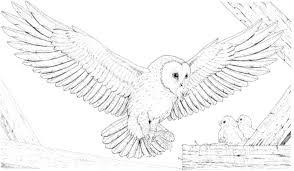 Small Picture Snowy Owl Coloring Pages For Kids 00 Pinterest Snowy Owl And Owl