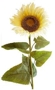 extra large cream sunflower stem by k k interiors inc 42 l sunflower head meres 9 diameter and stem is 42 l by kk interiors inc walmart