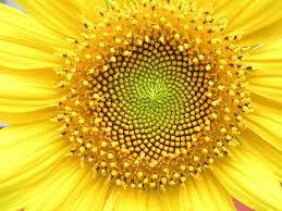 Blog para la reflexión: Simetría: el lenguaje de la naturaleza