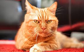safely clean dried cat urine from