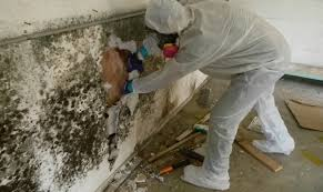 mold mitigation cost. Beautiful Mitigation To Mold Mitigation Cost A
