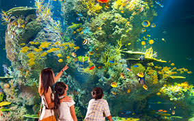 singapore zoo admission ticket with