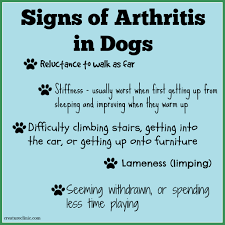 osteoarthritis pain relief for dogs