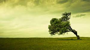 Tree Background Images on WallpaperSafari