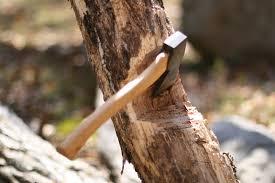 نتیجه تصویری برای درخت شکسته