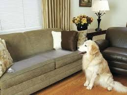 pets furniture. Keep Pets Off Furniture Images Pet Covers Amazon
