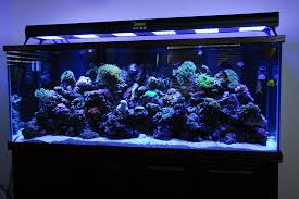 best quality with the latest design that you can make the choice to led aquarium lighting