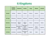 6 Kingdoms Characteristics Chart Summary Of The Equivalence In Kingdom Classification