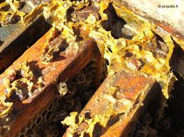 Image result for propolis