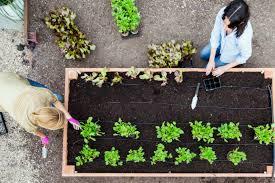 raised garden bed easy diy steps to