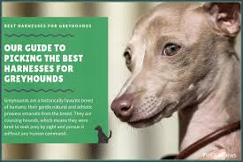 Voyager Harness Size Chart 9 Best Harnesses For Greyhounds Our Walking And No Pull Picks