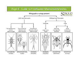 Macroinvertebrate Identification Key